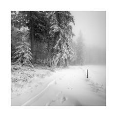 ~auf leisen Schritten~ (ArztG.|Photo) Tags: silence snow trees square le mono