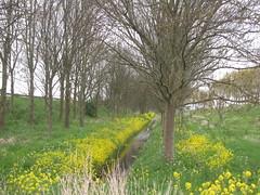 IMG_8392 (kassandrus) Tags: hiking wandelen netherlands nederland struinenenvorsen oude hollandse waterlinie