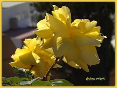 Almería 12 flores. (ferlomu) Tags: almeria andalucia ferlomu flor flower