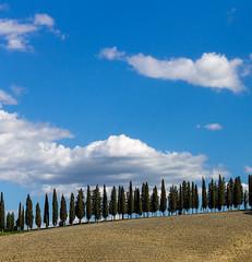 Cipressi (gianKE) Tags: cipressi tuscany
