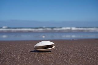 Seashell ☀�
