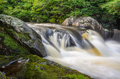 Old Growth Cascade (Aaron Springer) Tags: michigan upperpeninsulaofmichigan waterfall river stream water gorge woodland forest rock stone moss green outdoor nature landscape waterscape