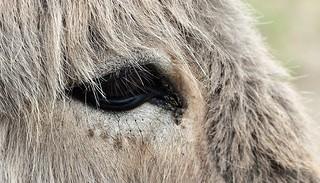 Eye of an Donkey....HMM