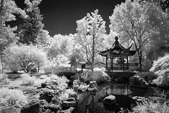 Chinese Garden (Jon Dickson Photography) Tags: mobot botanical garden infrared waterscape