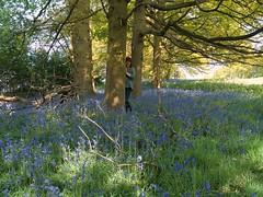 52 Weeks - Week 19 - The Bluebell Wood (World of Izon) Tags: 52weekproject selfportrait bluebells trees wood springflowers