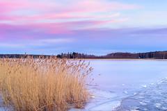 Trace of the Ferry (Peter Vestin) Tags: nikondf voigtländerultron4020slii siruin3204x siruik30x adobecreativecloudphotography topazlabscompletecollection herrön skattkärr karlstad värmland sweden vänern nature landscape seascape sunset ice reeds winter