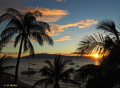 A Ka'anapali Sunset - Maui, Hawaii (Barra1man) Tags: nature akaanapalisunset beach palmtrees sun water pacificocean pacific ocean lanai lanaiisland maui hawaii kaanapali silhouettes foliage trees olympus olympusem1 lens918mm iso800 f221200 tropical vacation