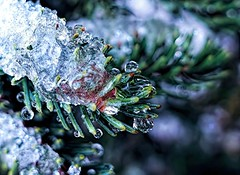 Into The Woods  . . . (JLS Photography - Alaska) Tags: macromondays macro macroshot woods forest tree spruce sprucetrees blackspruce ice droplets frozen snow jlsphotographyalaska bokeh