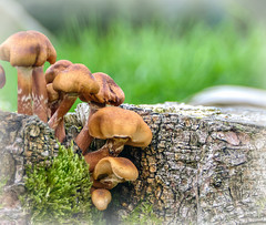macro monday's theme: into the woods (Körnchen59) Tags: pilze mushrooms macromonday wald woods forest körnchen59 elke körner pentax k7