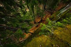 Step beyond (Jyrki Salmi) Tags: jyrki salmi kotka pyhtää valkmusa moronvuori finland outdoor forest