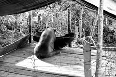 DSC_7850 (Diegomaxp) Tags: icononzofarc diegomaxp visita de estudiantes la universidad nacional colombia al departamento del tolima municipio icononzo una las zonas veredales transitorias normalización zvtn facultal medicina veterinaria y zootecnia