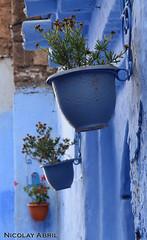 Chefchaouen flower pots (Morocco) (Nicolay Abril) Tags: chauen xauen chefchauen tangiertetouan tétouan tangertetouan tangertetuan tetuán tetuanprovince marruecos marocco morocco maroc marokko maghreb magreb africa afrika afrique شفشاو الشاون تطوان المغرب أفريقيا العربي chefchaouen chaouen xaouen