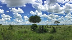 the park (Cybergabi) Tags: tanzania africa 2016 safari mikuminationalpark photostream