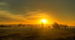 Sunrise in West Frisia. (Alex-de-Haas) Tags: 50mm d5 hdr holland hollandseluchten nederland netherlands nikkor nikkor50mm nikon nikond5 noordholland thenetherlands westfriesland baretrees beautiful beauty bomen bomenrij boom boomgrens buiten buitenshuis daglicht daylight fieryskies handheld highdynamicrange kalebomen landscape landschap licht light mooi morning ochtend orangeskies outdoor outdoors polder schoonheid skies sky skyfire sun sunrise sunriselight tree treeline trees warm winter zon zonsopgang