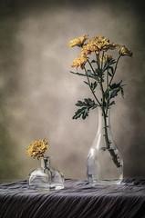 Flores y cristal  III (JACRIS08) Tags: flores cristal glass bodegon stilllife