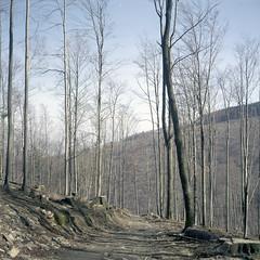 Opawskie Mountains, Poland. (wojszyca) Tags: yashica mat 124g tlr 6x6 120 mediumformat fuji pro 160c gossen lunaprosbc epson v800 mountains trail path hike hiking outdoors nature landscape poland forest