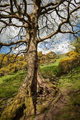 1920p 72dpi-7069 (reach.richardgibbens) Tags: bowland lancashire england uk littledale fell moorland moor valley dale