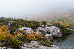 20170425-13-Mist over Tarn Shelf (Roger T Wong) Tags: 2017 australia mtfield mtfieldnationalpark np nationalpark nothofagusgunnii rogertwong sel1635z sony1635 sonya7ii sonyalpha7ii sonyfe1635mmf4zaosscarlzeissvariotessart sonyilce7m2 tarnshelf tasmania bushwalk deciduousbeech fagus fog hike mist orange outdoors tramp trek walk