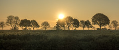 Rising (Jorden Esser) Tags: pieterpad03 dawn field hss leg03 light orange sliderssunday sun sundawn sunrise trees silhouette