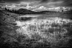 Pond (evanffitzer) Tags: bw blackandwhite pond water hills kamloops mono outdoors reeds clouds canoneos60d britishcolumbia canada hdr landscape evanfitzer evanffitzer photography photographer calm sagebrush