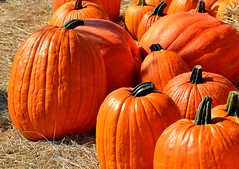 pumpkins-1572864_1280 (randy-travel) Tags: thanksgiving newyorkcity holiday