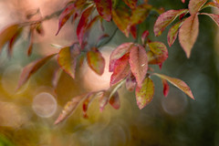 Back to life (hploeckl) Tags: diaplan leaf leaves vintage prime nature nikond750 natural trioplan projection