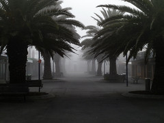 Ghost Town Mornings (Steve Taylor (Photography)) Tags: monochrome monotone calm newzealand nz southisland canterbury christchurch newbrighton trees silhouette mist fog mall