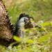 emu - humphrey (1 of 2)