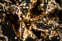 DSC_0049 (theduckmanz) Tags: nikon d5100 nikond5100 microscope micro dirt light space