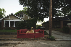No. 72 of #sofasinthewild {Explored 5/4/2017} (moke076) Tags: nikon d7000 fawn dog animal pet moose great dane couch sofa abandoned sofasinthewild atlanta georgia sideoftheroad sidewalk serious face grantpark red bungalow explore explored