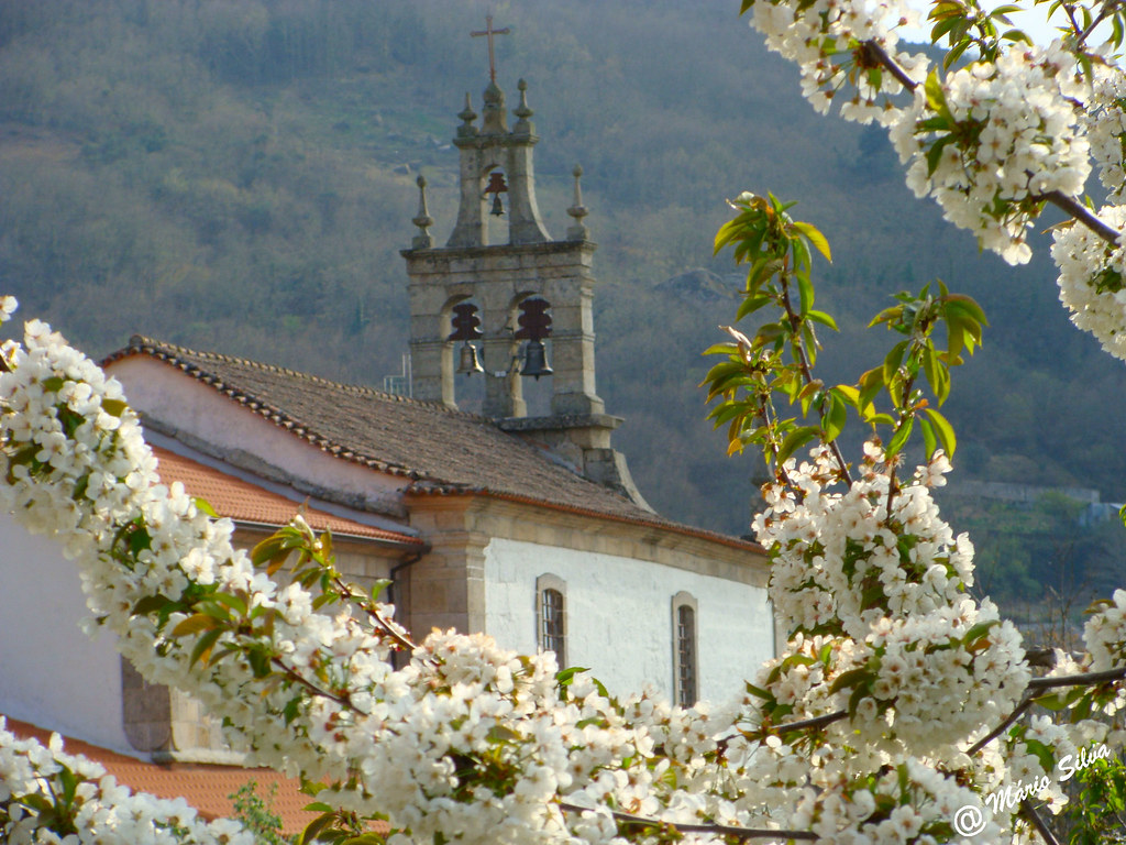 Águas Frias (Chaves) - ... os ramos floridos e a igreja matriz ...
