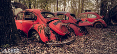 Red Riding Hoods (LaR0b) Tags: ue urbex urban explrong exploration decay abandoned lar0b lost hdr highdynamicrange beetle car vehicle transport oldtimer old volkswagen vw classic