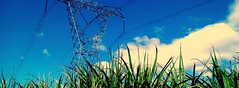 """BEYOND """"ELECTRICITY FROM SUGARCANE"""""""