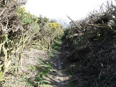P1090975 Cashel yn Ard, Isle of Man (archaeologist_d) Tags: isleofman chamberedtomb neolithic 2000bc fabulous cashelynard archaeologicalruin archaeologicalsite