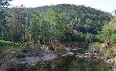 Coomera River (dustaway) Tags: landscape river streamscape valley coomerariver australianlandscape australianrivers water streambed pools forest riparianforest sequeensland queensland australia