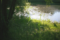 . (ammoniumchlorid) Tags: bokeh lake grass green nature natureycrap canon canoneos6d ef50mmf114 spring