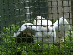 Birds of Prey Owl. (FloraandFauna_2) Tags: birds prey thorp perrow arboretum bedale north yorkshire