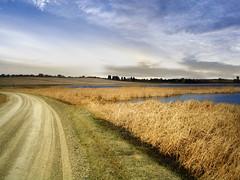 Tall grass shore (mrbillt6) Tags: northdakota landscape rural prairie road waters outdoors country countryside grass shore