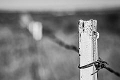 On Guard (brev99) Tags: d610 nikon50mmf18d tulsa fence barbedwire shallowdof bokeh blur blackandwhite perfecteffects17 ononesoftware on1photoraw2017 topazdetail photos nikviveza