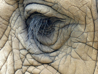 macromondays* eye* old elephant eye