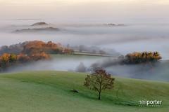 Misty Dawn (www.neilporterphotography.com) Tags: mist devon tree south exeter