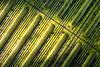 Day #3403 (cazphoto.co.uk) Tags: panasonic lumix dmcgx7 panasonic20mmf17lumixgiiasph project365 beyond3288 250417 ingatestone station steps yellow treads light texture abstract