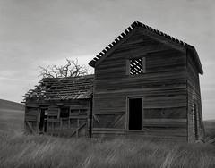 Abandoned Farmhouse, Washington (austin granger) Tags: abandoned farmhouse washington field farm decay time impermanence weathered worn evidence wood slats grass largeformat film chamonix
