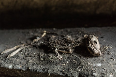 IMG_2624kl (Johan Bauwens) Tags: deaddog skeleton