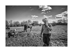 (Jan Dobrovsky) Tags: 21mm landscape people outdoor m10 countryside contrast leica monochrome horse field volyn ukraine village countrylife document biogon reallife leicam10