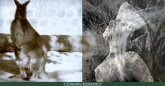 Cousin, Niece (andrefromont) Tags: andréfromont andrefromontfernandomort fernandomort diptych diptyque meditation méditation kangoo kangourou poils
