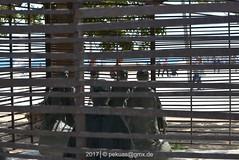 _PKA7419 (pekuas) Tags: pekuasgmxde peterasmussen barcelona katalonien barceloneta platjadelabarceloneta