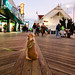 Laika on Ocean City Boardwalk | Maryland, USA