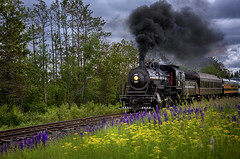 Simply Enjoy The Journey (karenhunnicutt) Tags: steamengine train northshore duluth minnesota lupine parsnip wildflowers summer karenhunnicuttphotographycom fineartphotographer