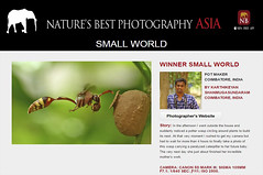 Winner - Pot Maker (karthik Nature photography) Tags: naturesbestphotographyasia nature winnernbpa nbpa2017 smallworldwinner smallworld wasp waspinflight potmaker potterwasp awards 2017 awards2017 naturesbestphotographyawards